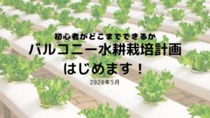 バルコニー水耕栽培はじめます!
